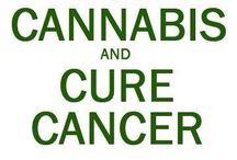 cannabis / by Tanya Thompson