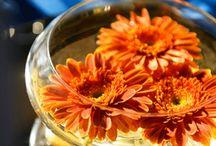 Fall Wedding / by Chelsa Bratton