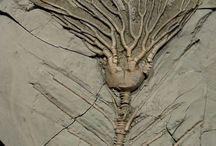 Fossils/Minerals/Rocks