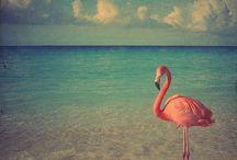 Flamingos &