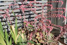 Flowers 2015 / Cacti