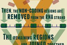 Biology / DNA og RNA og Protein