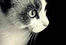 ♥ Burro ♥ / My cat Burro :)
