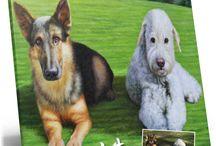 Pet Portraits / Hand Painted Pet Portraits from photographs