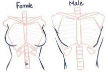 Anatomía