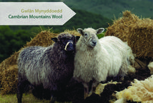 Cambrian Mountains / Images and information about the Cambrian Mountains region of Wales