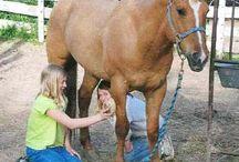 Tips voor verzorging paarden