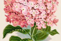 kartki kwiaty