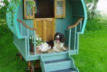 Dog life :-)