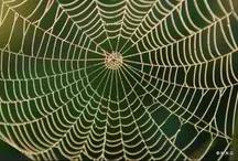 Toiles d araignees