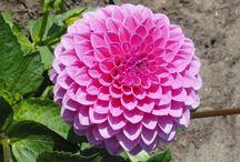 flower fancy