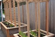 Garden  Edible Ideas / by Christy Klein