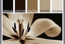 Home Colors Designed