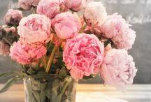 Flowers / by Bren