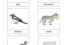 kleuters dieren / woordkaarten dieren bas