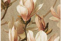 Manolya-Orkide-BaharDalı-KarTopu