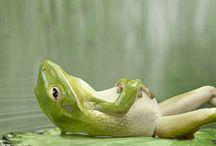 Love thy frog / by Alyce Fulton-baez