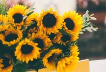 Sunflowers☀️