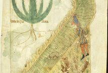 Manuskrypty roślinkowe