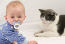 Preparing Your Pet for Your New Baby