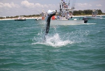 Fishing Destinations / Great Places to book a Fishing Guide and experience incredible fishing! / by ReserveFishing.com