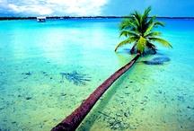 Palm Trees / by Nautical Wheeler Jewelry