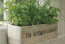 keuken kookplanten