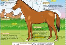 pédagogie équitation enfants