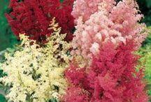 plantas que quiero