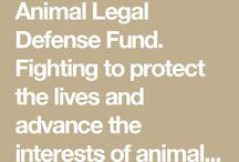 Animal Organizations