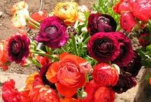 Spring Flowers Grown By Bare Mtn Farm / Bare Mtn Farm's  Spring Flowers