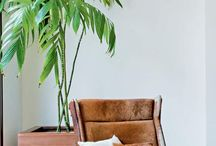 palmeira camaedorea