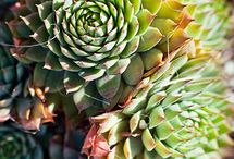 Drought-tolerant Gardening