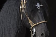 peruvian horse pics