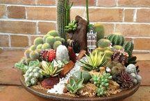 vaso tipo bacia com suculentas e cactus