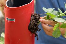 Gardening Stuff / Gardening Stuff, cool vegetables or fruits to try, awesome containers or gardening designs...