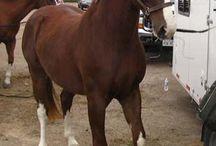 koně / jenom kone a veci s konema ktere by jsem se chtela naucit atd.....