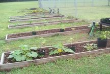 School Gardens-Grow Food to Grow Minds / Pasco County Schools is proud to feature our school gardens!