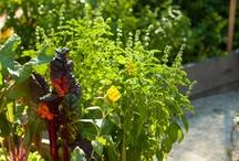 Natasha's Garden
