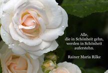 LICHTDIAMANT - Die Weisheiten des Rainer Maria Rilke / Texte und Gedichte von Rainer Maria Rilke