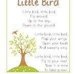 Bird preschool theme