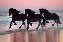 Animals - Horses