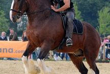 horses...my life
