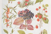 Illustration (Plants)
