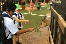 Year 4D Trip to Emirates Park Zoo.