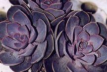 [ Inspiration Shades | Violine & Co ] / purple, violet, violine, parme, / by Alex A.D. @AlexAlDel