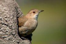 Aves de Menorca