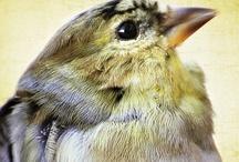 Birds / by Kelly Dietrich
