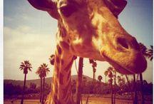 San Diego Fun / While Rancho Bernardo Inn is hard to leave, there's ton of fun to be had all around San Diego!
