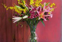 Mãe, Amor e Flor / Novidade cheia de amor!